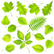 Collection of green leaves. Vector
