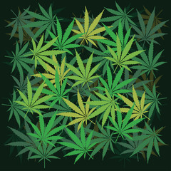 Plenty of cannabis leafs - illustration
