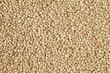 uncooked quinoa - 49778117
