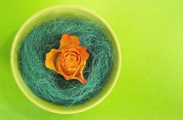 Orange rose in a green bowl