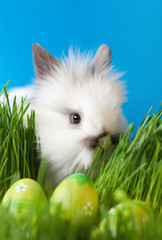 Downy bunny is in the thick green grass near the Easter eggs