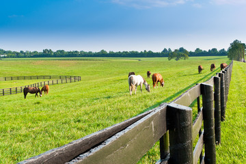 Country summer landscape.
