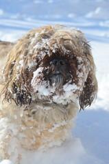 Yoschi - Toben im Schnee