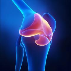 Articular cartilage anatomy