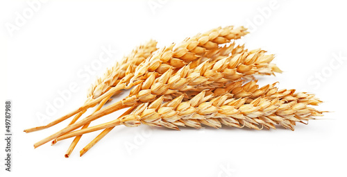 wheat isolated - 49787988
