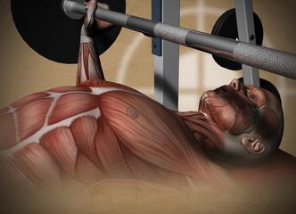 Muskel Aufbau