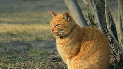 Cat in Koganei Park,Tokyo,Japan