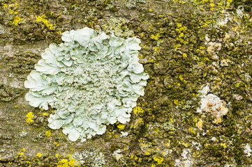 Lichens of different colors