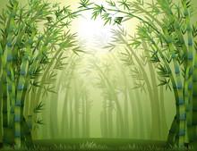 Les bambous à l'intérieur de la forêt