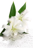 Fototapety Beautiful lily, isolated on white