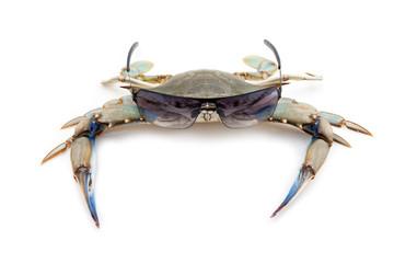 Blue crab wearing sunglasses