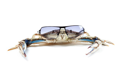 Blue crab wearing sunglasses