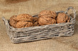 Walnuts in a wicker basket on a sacking