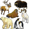 set with wild animals of arctic