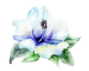 Blue Hibiskus flower