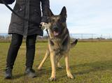 german shepherd and owner