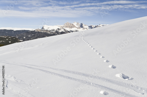Alpine Skiing Marks on the Seiser Alm