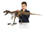Little child thinking about dinosaur skeleton isolated on white