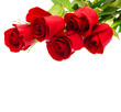 bouquet of red rose flower on white