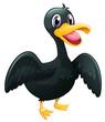 A  black duck