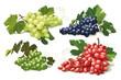 set of ripe grapes
