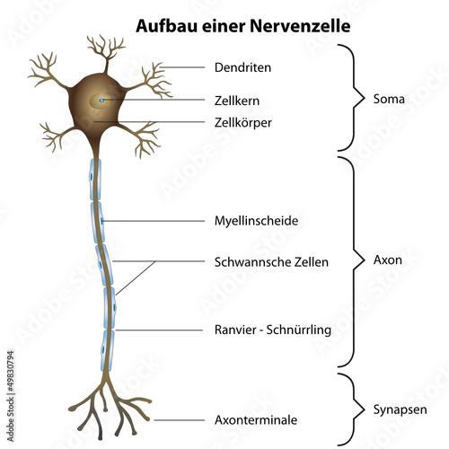 Aufbau und Funktion der Zelle - Zytologie - abiwebde