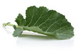 Fresh Collard Green