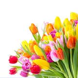 Fototapety bunter Blumenstrauß