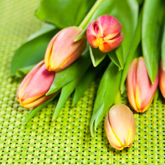 Colorful tulips - Farbenfrohe Tulpen