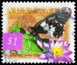 AUSTRALIA - CIRCA 1997 Big Greasy Butterfly