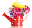 Beautiful bouquet of freesias in watering can, isolated on