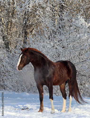 Horse in winter woods