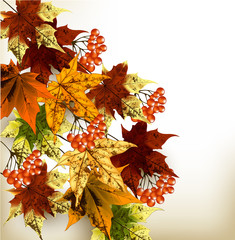 Autumn background with  colorful maple leafs