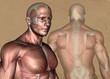 Brust und Rücken