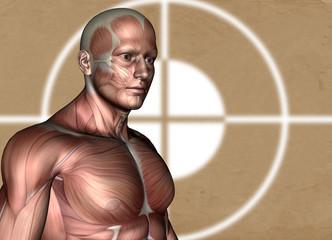 Muskeln im Visier