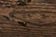 Grunge Background Wooden Cracked Texture Brown