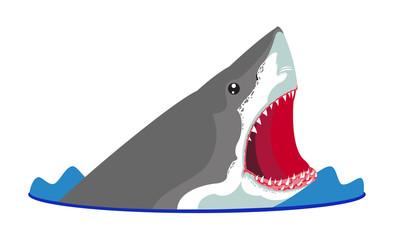 Beyaz köpekbalığı saldırısı