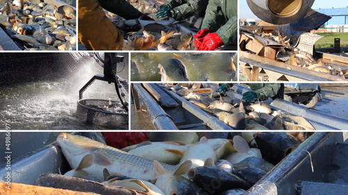 Fishing Industry, collage
