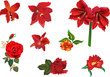collection of eight red flowers isolated on white