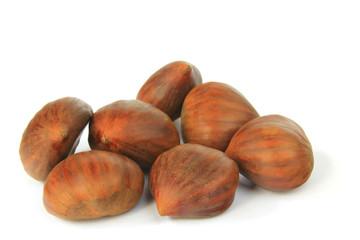 Maronen (Castanea sativa)