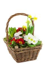 Körbchen mit Frühlingsblumen