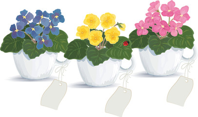 Violets in flowerpots over white background