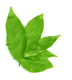 green bay leaf on a white background