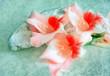 Stillleben mit Gladiolen