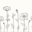 Floral background. Hand drawn Poppies