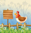 A hen above a wooden fence facing a wooden signboard