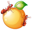 A fruit with two ants