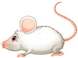 A white mouse