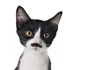Cute kitten with a mustache.