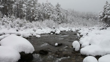 Snowy forest and stream